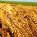 Gli arabi in Serbia possiedono 12.000 ettari di terreno coltivabile, i principali competitori Matijevic e Kostic