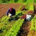 """Le trappole dei fondi europei """"IPARD"""" per l'agricoltura"""