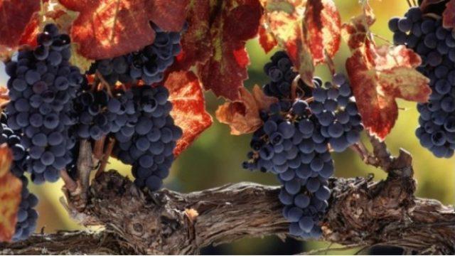 Wine-Tamo-i-ovde.jpg
