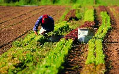 agricoltura_2.jpg