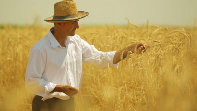 agricolture-mxdzojlzvdbwvk2hsytyjwixzves87uhpo4h4xy4uo.jpg