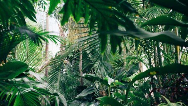 botanicka_basta_201021_tw630.jpg